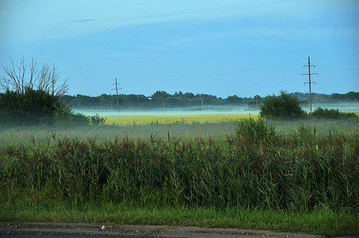 Fog, Summer, Road, Village, Field, Yellow, Calm, Travel