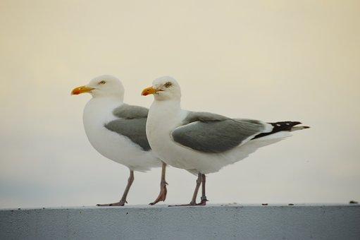 Bird, Seagull, Gull, Wings, Flight, Freedom, Sky, Ocean