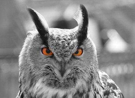 Eagle Owl, Eyes, Owl, Feather, Animal, Nature, Bird