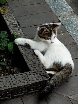 Cat, Cute Animals, Kitten, Cute, Animal, Mammal