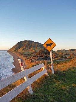 Beach, New Zealand, Ocean, Water, Nature, Coast