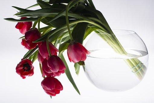 Flower, Bottle, Black, Color, Tulips, Flowers, Red