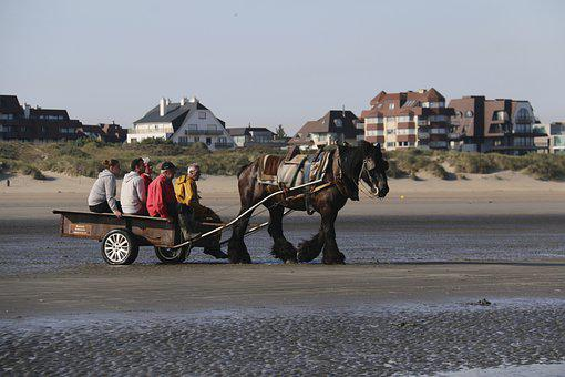 Fishing, Horse, Tradition, Fishermen, Sea, Belgium