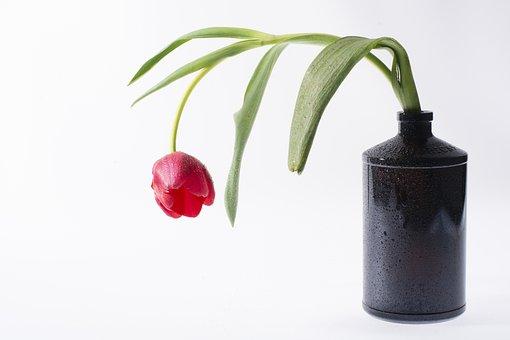 Flower, Tulip, Bottle, Black, Color, Tulips, Flowers
