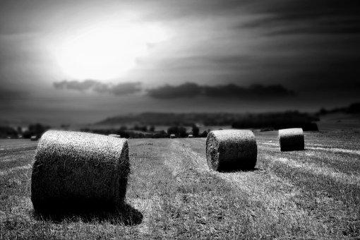 Wheat, Fields, Summer, Agriculture, Nature, Grain, Farm