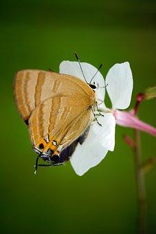 Butterfly, Flower, Bee, Nature, Honey, Garden, Green