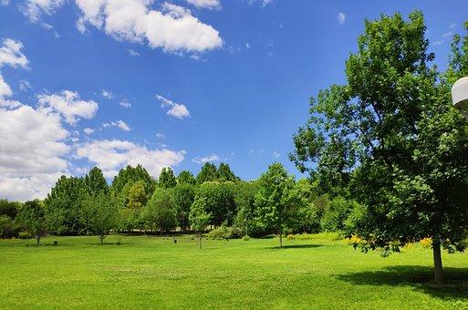 Park, Green Space, Shade, Blue Sky, White Cloud