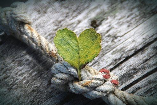 Heart, Leaf, Rope, Dew, Wood, Plant, Love, Decoration