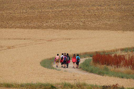 Hikers, Hiking, Walking, People, Fields, Wheat, Cereals