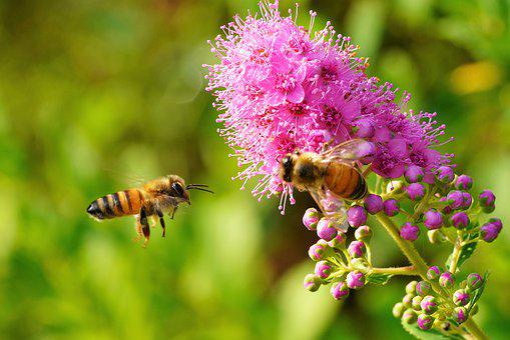 Bee, Violet, Flower, Nature, Purple, Hub, Close