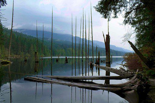 Lake, Trees, Nature, Landscape, River, Forest