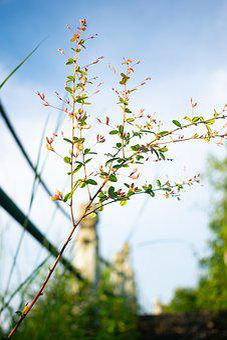 Flower, Grass, Blue Sky, Wild Flowers, Little Flower