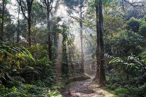 Landscape, Rainforest, Lane, Morning Mist, Asahi