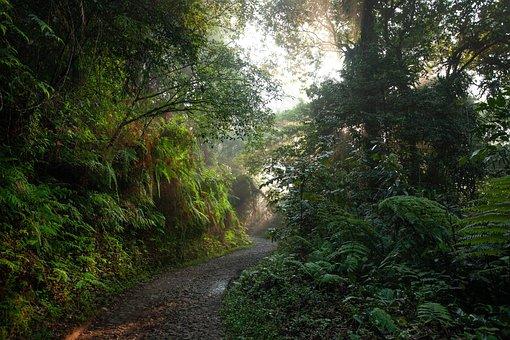 Landscape, Rainforest, Road, Asahi, Morning Mist