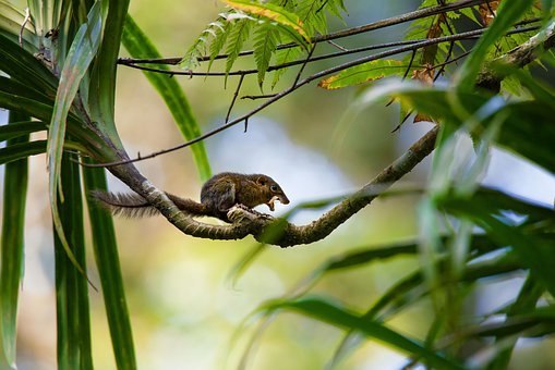 Small Animals, Rainforest, My Content, Tupaia Montana