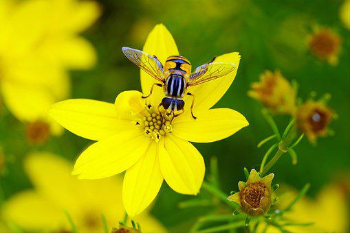 Flower, Bee, Nature, Honey, Garden, Green, Yellow