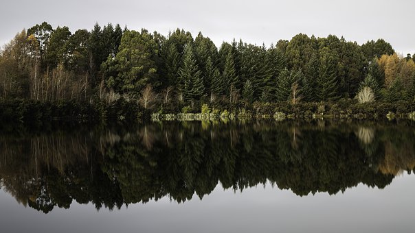 Mirror, Trees, Tree, Nature, Forest, Lake, Water