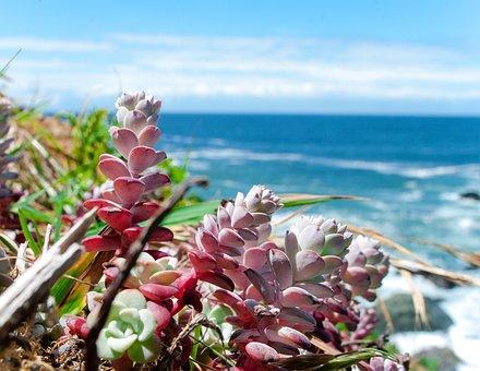 Ocean, Beach, Succulents, Water, Summer, Sand, Sky