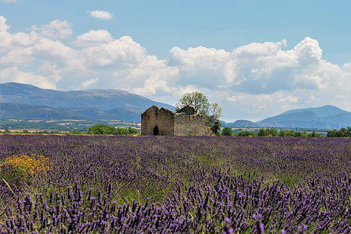 Provence, Lavender, Lavender Fields, France, House