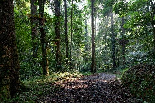 Landscape, Rainforest, Road, A Variety Of Plants