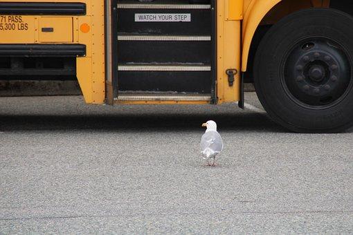 Seagull, School Bus, Enter, School, Drive, Canada