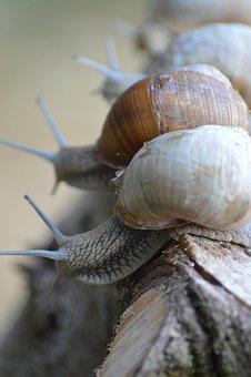Snails, Three, Shells, Wood, Nature, Horns, Eyes, Brown