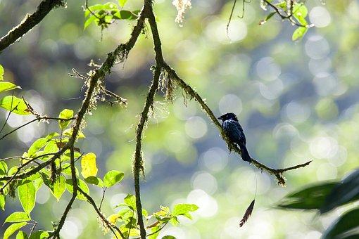 Wild Birds, Rainforest