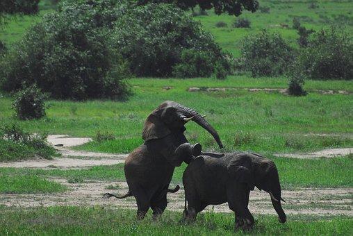 Elephants, Tanzania, Africa, Nature, Tarangire