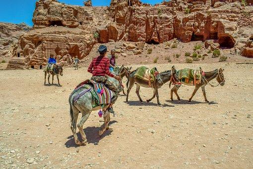 Donkeys, Transportation, Animals, Al Siq Canyon, Desert