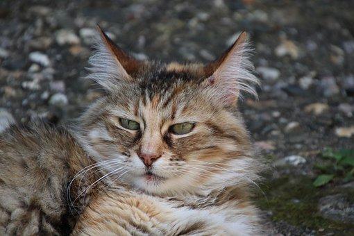 Cats, Felines, Felids, Carnivore, Cute, Adorable