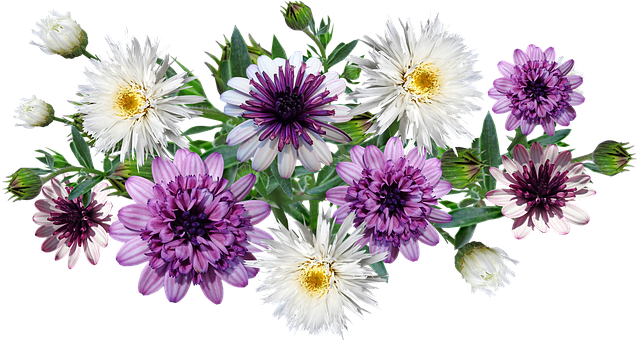 Flowers, Daisies, Leaves, Colorful, Arrangement