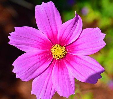 Flower, Floral, Spring, Bloom, Flora, Pink, Romantic