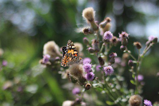 Butterfly, Nature, Insect, Macro, Flower, Beetle