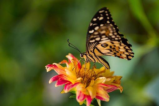 Butterfly, Daisy, Orange, Nature, Summer, Flower, Wings