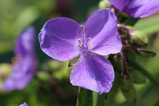 Summer, Garden, Flower, Flowers, Small, Violet