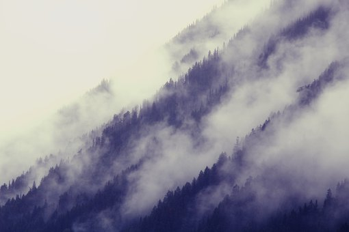 Canada, Forest, Fog, Clouds, Trees, Landscape, Nature