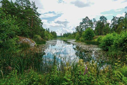 Nature, Forest, Lake, Landscape, Summer, Spring, Grass