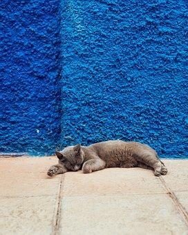 Cat, Sleep, Wall, Blue, Grey, Leisure, Relax, Minimal