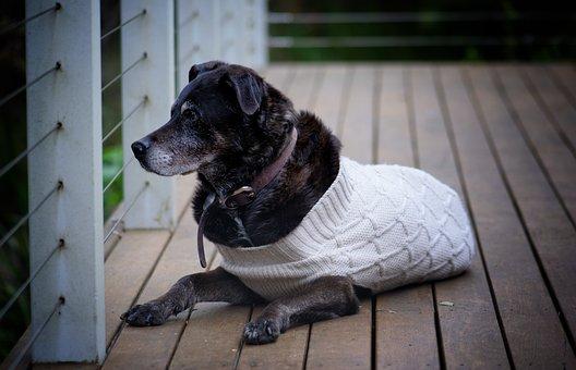 Dog, Faithful, Animal, Look, Ears, Fur, Canine, Friend