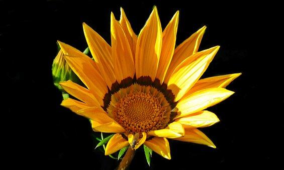 Flower, Yellow, Summer, Garden, Nature, The Petals