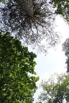 Trees, Sky, Uplight, Tree, Landscape, Nature, Clouds