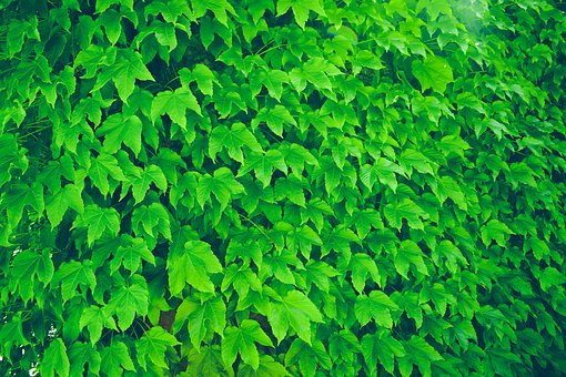 Leaves, Texture, Pattern, Plant, Foliage