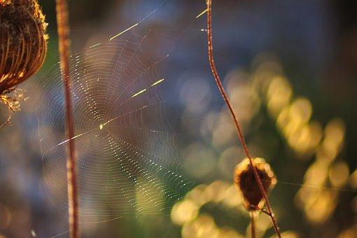 Cobweb, Nature, Plant, Sunbeam