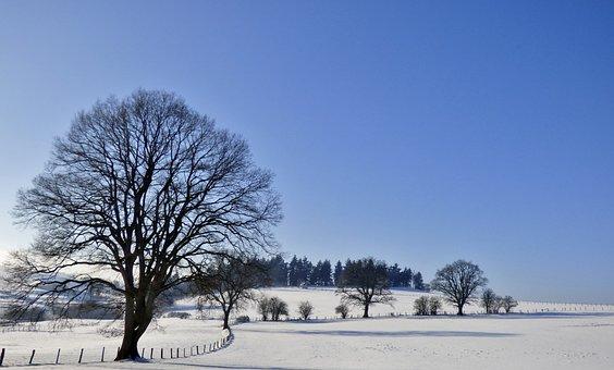 Snow Landscape, Tree, Winter, Snow, Cold, Landscape