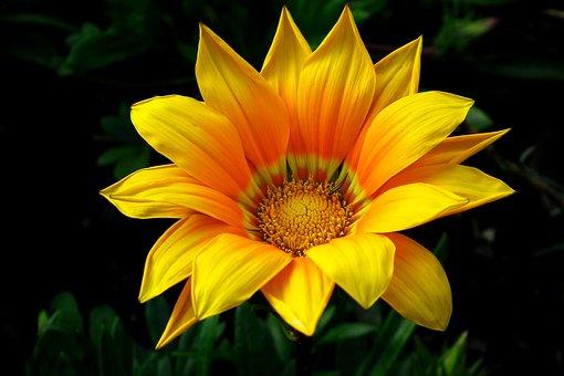 Flower, The Sun, Summer, Spring, Garden, Light, Nature