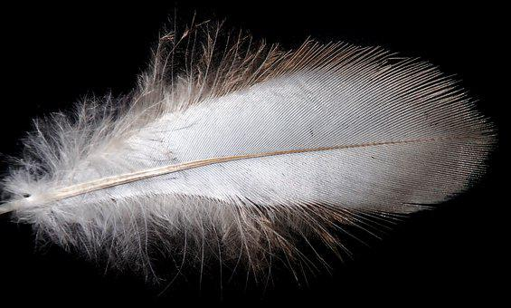Feather, White, Plumage, Bird, Flying, Fluffy, Nature