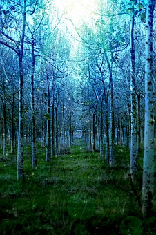 Tree, Forest, Nature, Mystical, Woods, Trees, Green