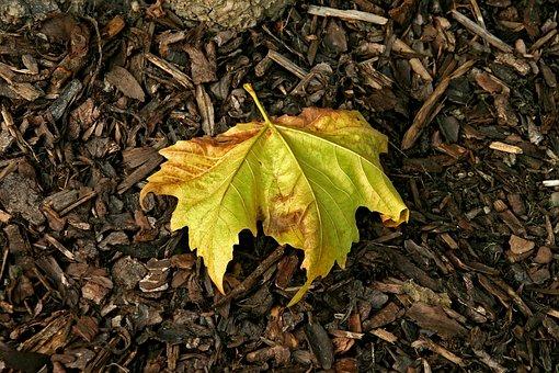 Leaf, Autumn, Autumn Leaves, Fall, Nature, Brown