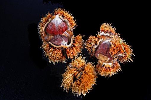 Chestnut, Spur, Casing, Brown, Prickly, Fruits, Autumn