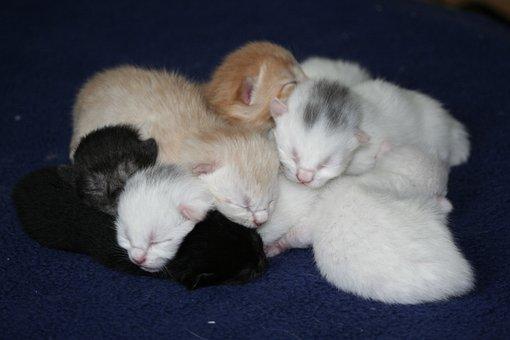 Cat, Domestic Cats, Kitten, Baby Kitten, Baby Cats, Ekh
